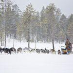 husky_tour_rovaniemi_3