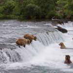 alaska-brooks-falls-camp-